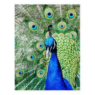 Green Peacock Postcard