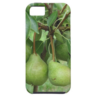 Green pears hanging on a growing pear tree case for the iPhone 5