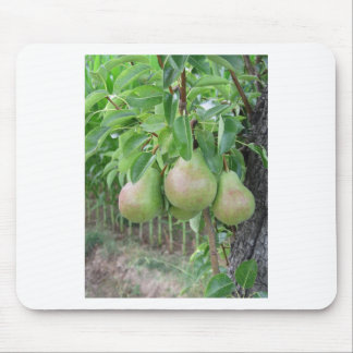 Green pears hanging on a growing pear tree mouse pad