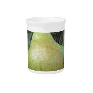 Green pears hanging on a growing pear tree pitcher