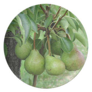 Green pears hanging on a growing pear tree plate