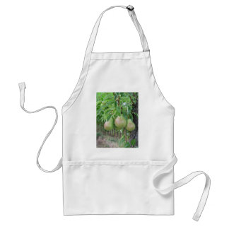 Green pears hanging on a growing pear tree standard apron