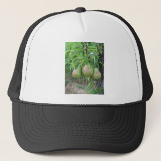 Green pears hanging on a growing pear tree trucker hat
