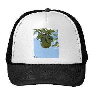 Green pears on tree branches mesh hats