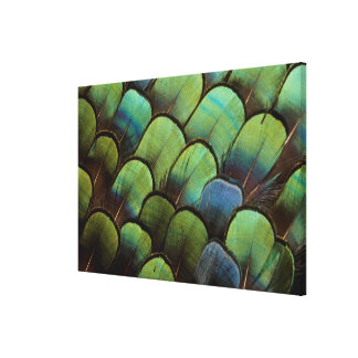 Green pheasant geather pattern canvas print
