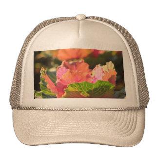 Green Pink Cabbage Ornamental Vegetable Sunglight Cap