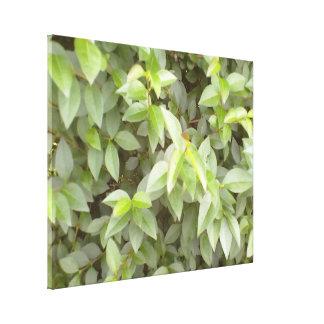 Green plant leaf stretched canvas print