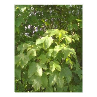Green plant leafs flyers