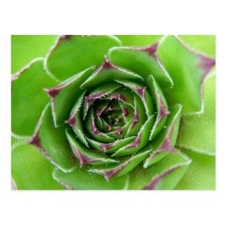 Green plant postcard