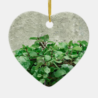 Green Plants Against Concrete Wall Ceramic Ornament
