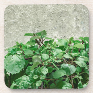 Green Plants Against Concrete Wall Coasters