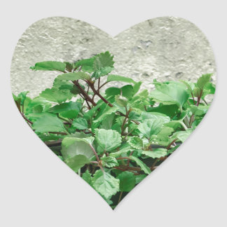 Green Plants Against Concrete Wall Heart Sticker