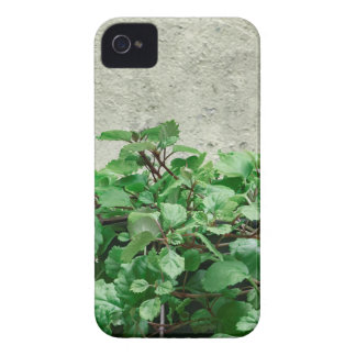 Green Plants Against Concrete Wall iPhone 4 Case-Mate Case