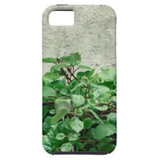 Green Plants Against Concrete Wall iPhone 5 Case