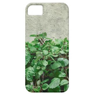 Green Plants Against Concrete Wall iPhone 5 Cases