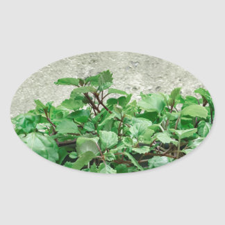Green Plants Against Concrete Wall Oval Sticker