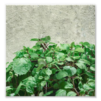 Green Plants Against Concrete Wall Photo Print