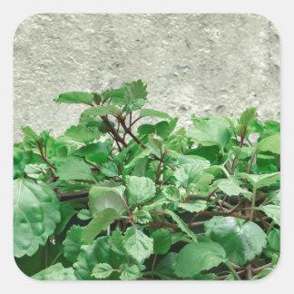 Green Plants Against Concrete Wall Square Sticker