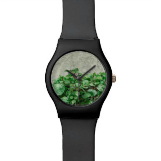 Green Plants Against Concrete Wall Watch