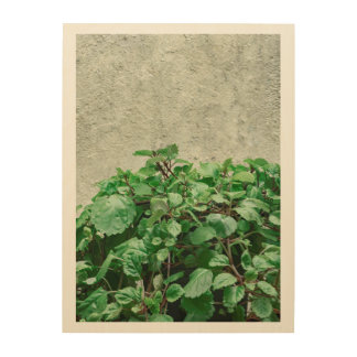 Green Plants Against Concrete Wall Wood Wall Art
