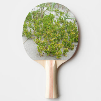 Green plants at the beach ping pong paddle