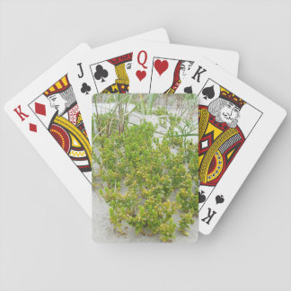Green plants at the beach playing cards