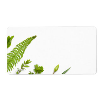 Green Plants Isolated on White Background