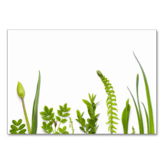 Green Plants Isolated on White Background Card