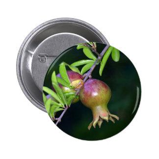 Green pomegranate fruit 6 cm round badge