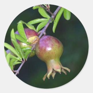 Green pomegranate fruit round sticker
