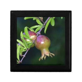 Green pomegranate fruit small square gift box