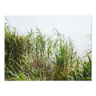 Green Reeds In A Grey Lake, Nature Photography Photo Art