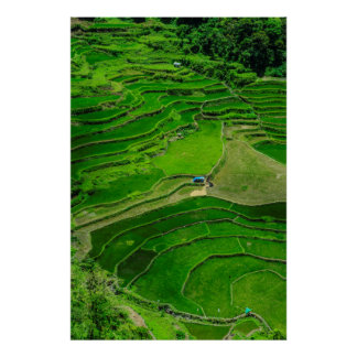 Green Rice terraces, Philippines Poster