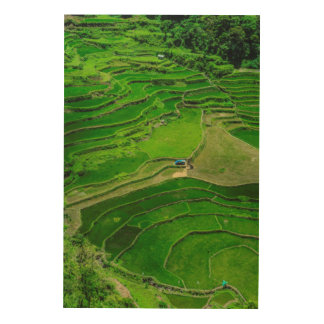 Green Rice terraces, Philippines Wood Wall Decor