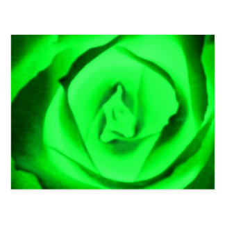 Green Rose Bud Post Card