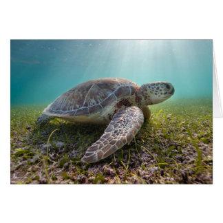 Green Sea Turtle At Dusk | Akumal Bay Card