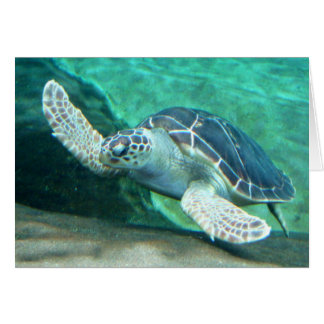 Green Sea Turtle Card