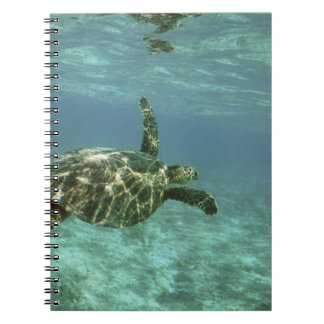 Green Sea Turtle, (Chelonia mydas), Kona Coast, Notebooks