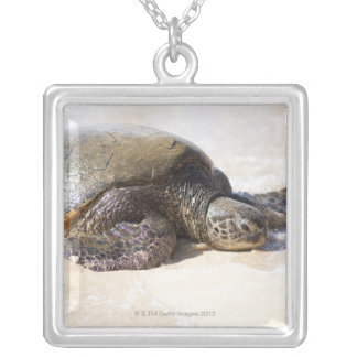 Green sea turtle Chelonia mydas) on the beach in Silver Plated Necklace
