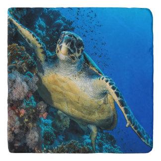 Green Sea Turtle   Red Sea Trivet