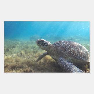 Green sea turtle relaxing underwater rectangular sticker