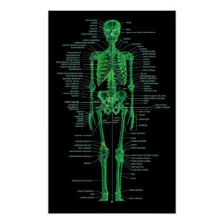green skeleton poster