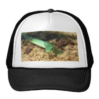 Green snake hat