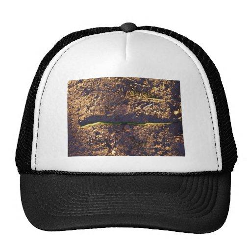 Green Snake on ground Hat