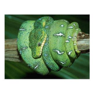 Green Snake Postcard