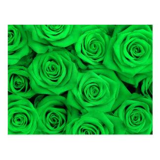Green Spectacular Roses Postcard