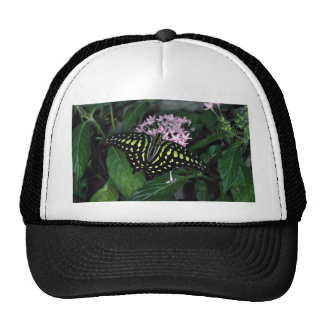 Green-spotted triangle butterfly, Malaysia Trucker Hats