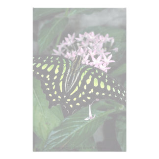 Green-spotted triangle butterfly, Malaysia Custom Stationery