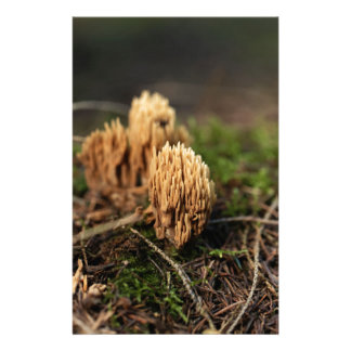 Green staining coral fungi (Ramaria abietina) Stationery