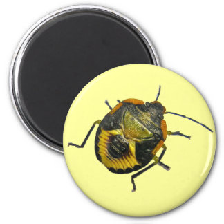 Green Stink Bug Nymph Coordinating Items 6 Cm Round Magnet